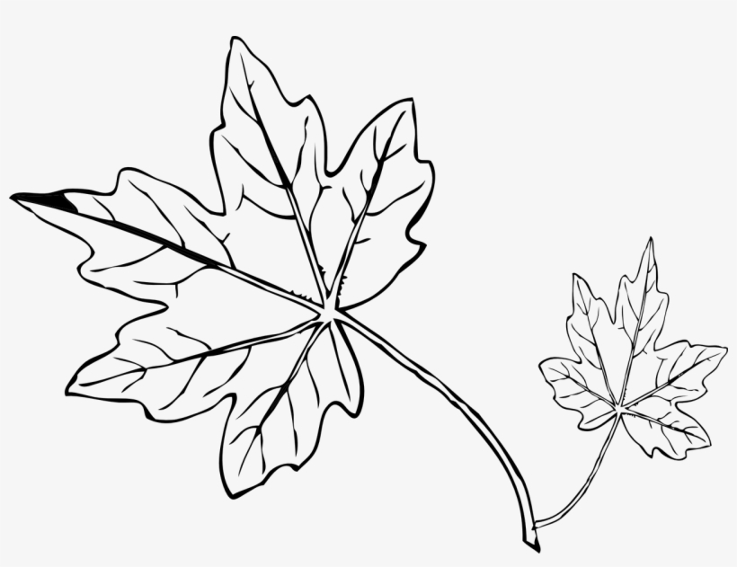 pumpkin and leaves coloring pages pumpkin with leaves coloring page coloring pages leaf leaves coloring and pages pumpkin
