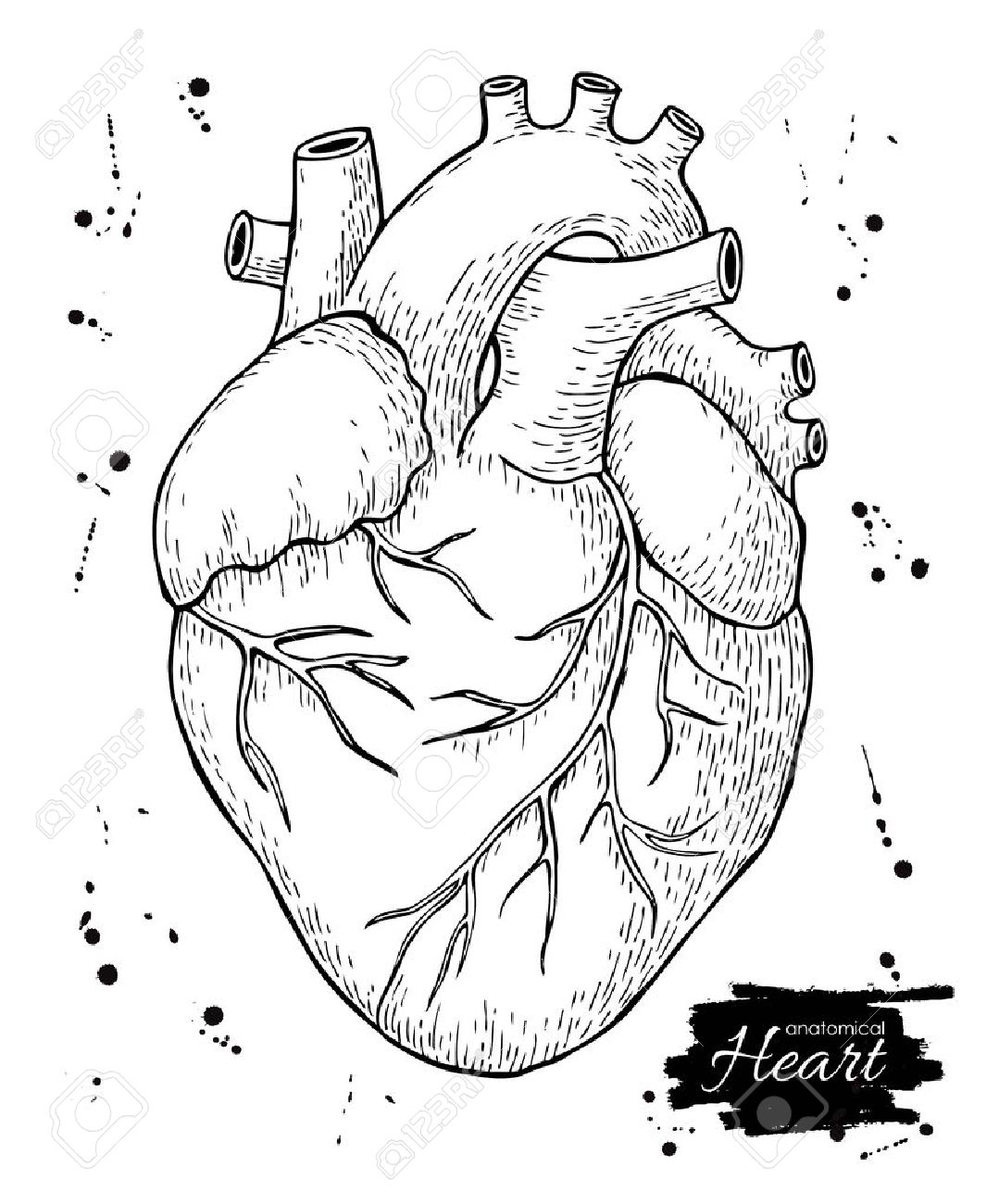 real heart coloring pages anatomical drawing heart at getdrawings free download heart pages real coloring