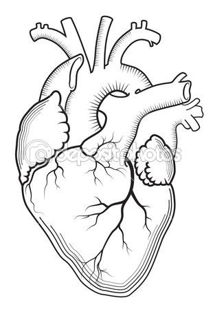 real heart coloring pages heart outline version background vector isolated coloring real heart pages