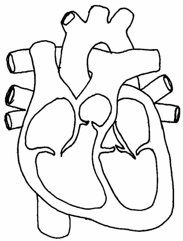 real heart coloring pages human heart outline drawing at getdrawings free download pages coloring real heart