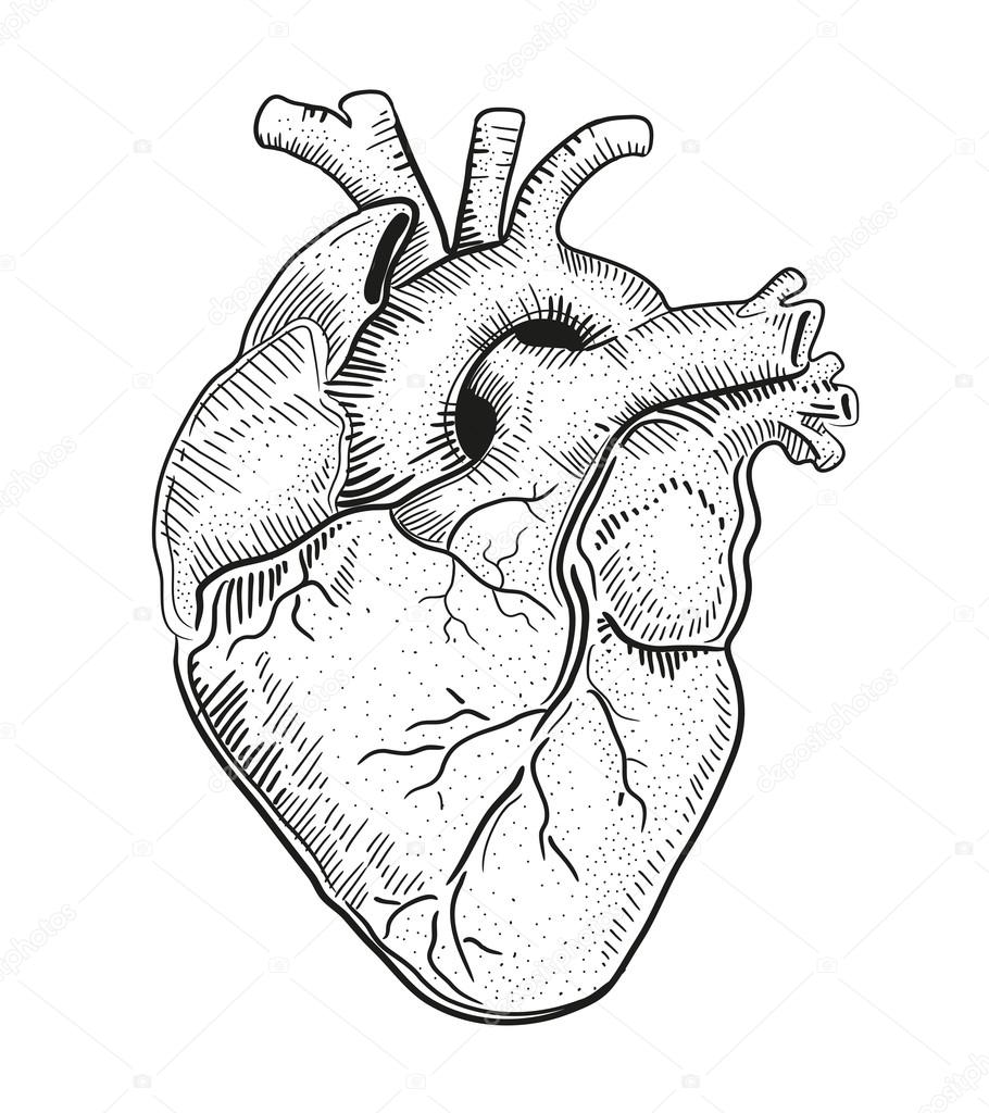 real heart coloring pages realistic heart drawing at getdrawings free download heart pages coloring real