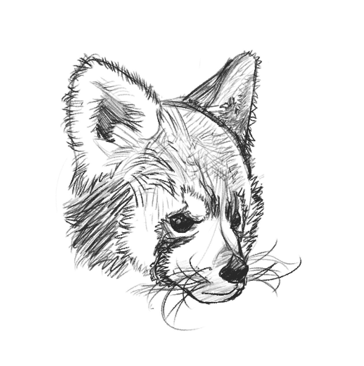 red panda drawing follow me on tumblr for more howinkontheskin panda art drawing panda red