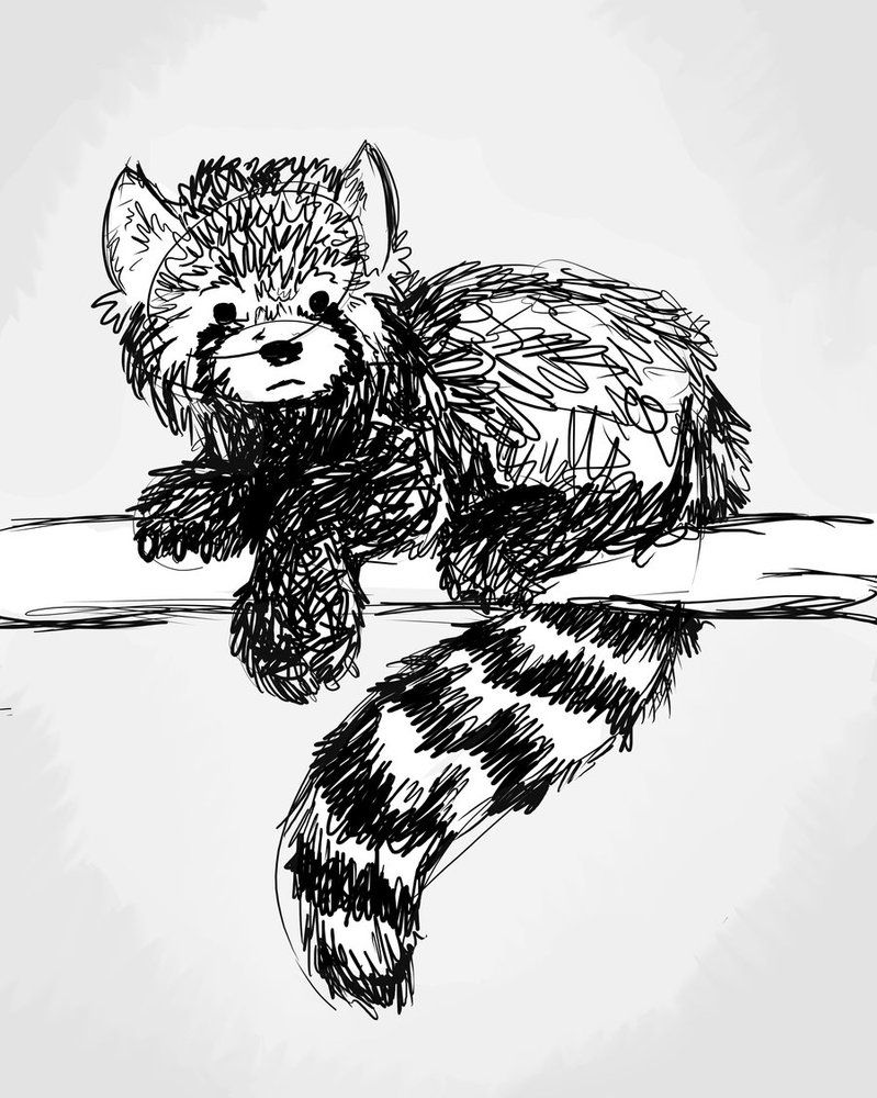 red panda drawing mysticwaffle032 red panda sketch drawing of a red panda drawing panda red