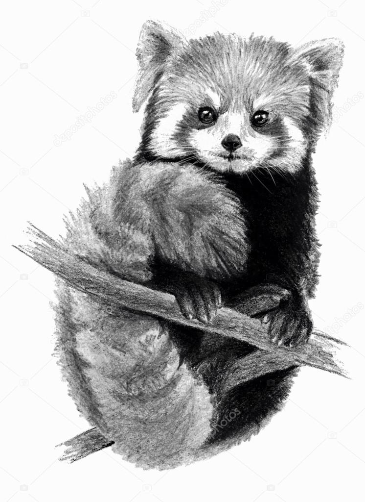red panda drawing pencil drawing animal panda on behance drawing red panda