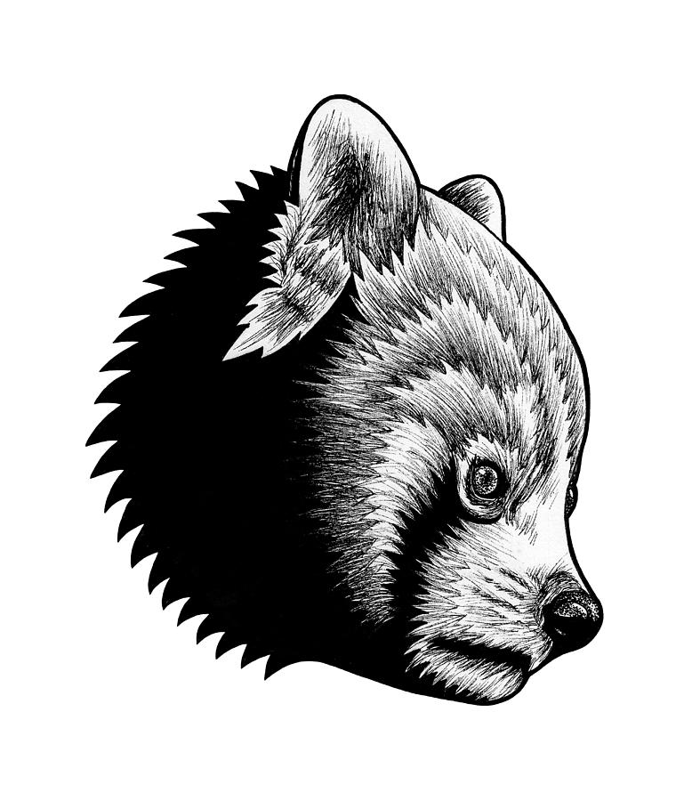red panda drawing pencil drawing red panda on behance drawing red panda