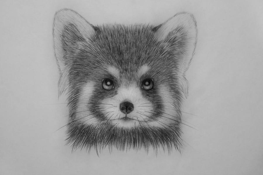 red panda drawing red panda 6 by panda kiddie on deviantart panda red drawing