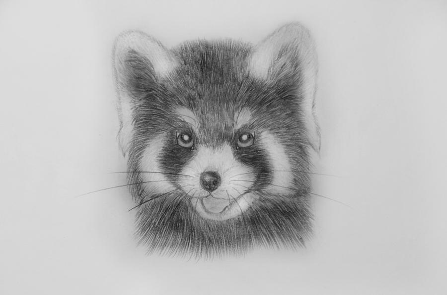 red panda drawing red panda animals drawings pictures drawings ideas for red panda drawing