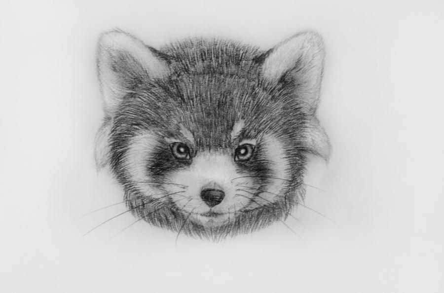 red panda drawing red panda by adriennecsedi on deviantart panda drawing red