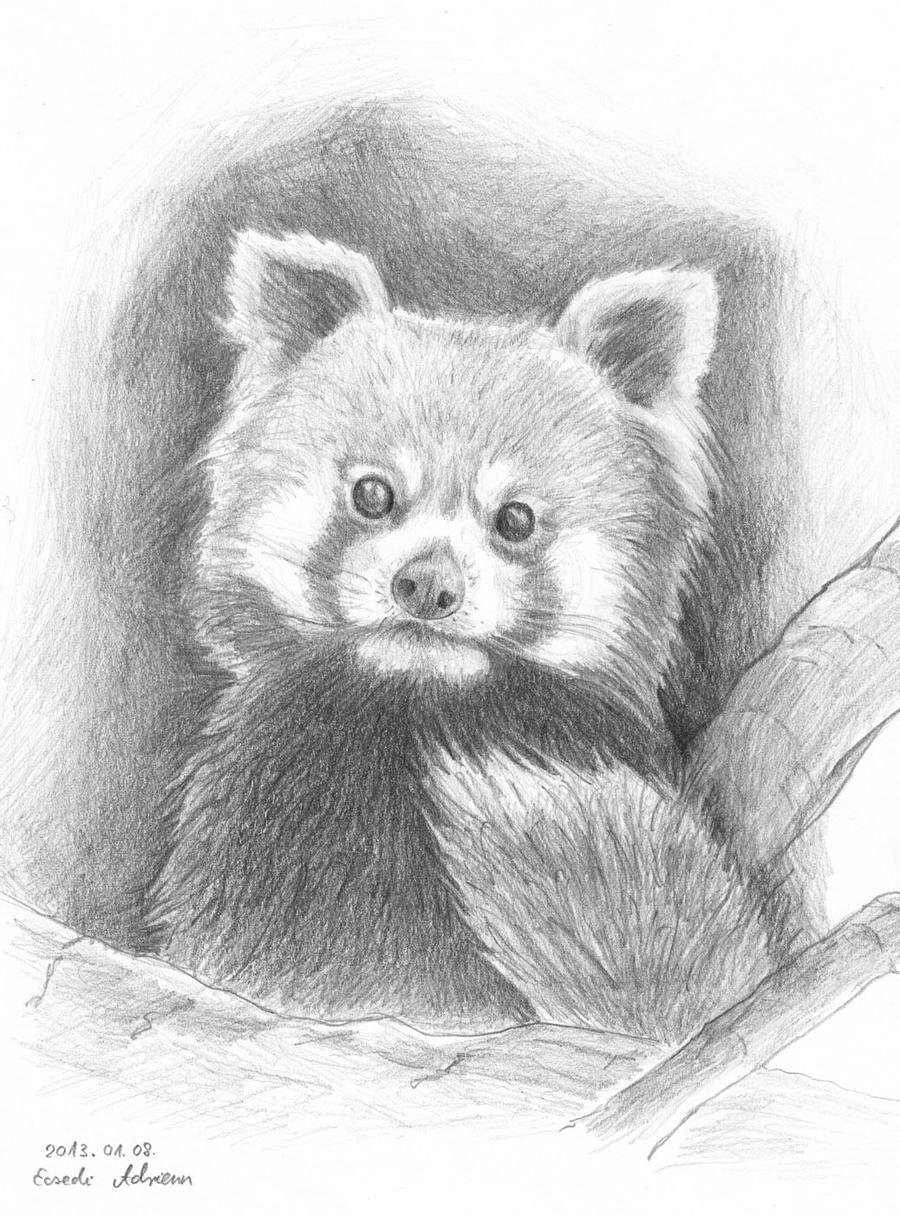 red panda drawing red panda by yeah drawing yeah on deviantart drawing panda red