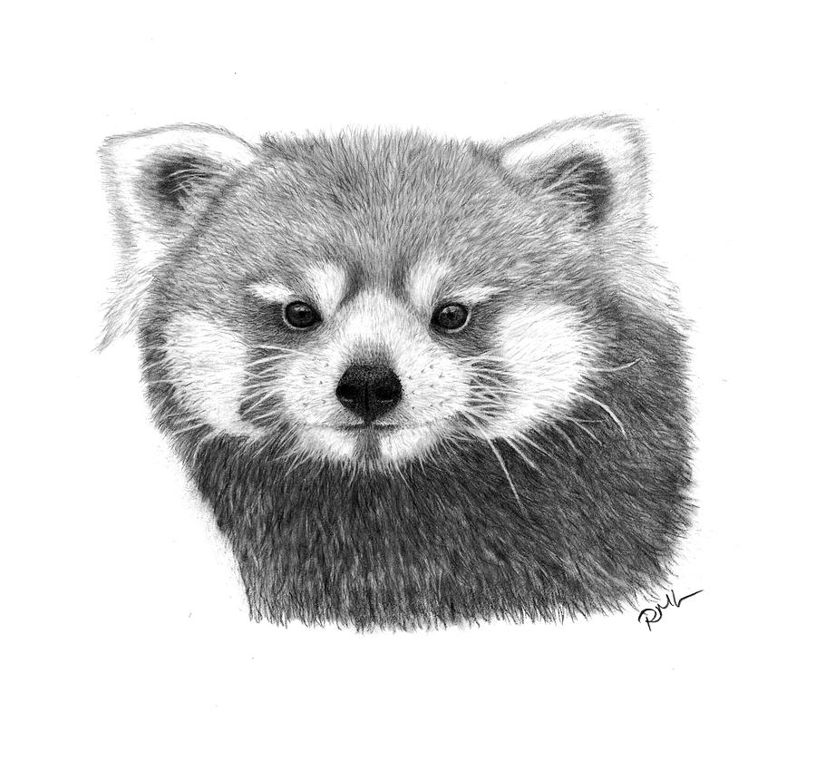 red panda drawing red panda drawing by loren dowding red panda drawing