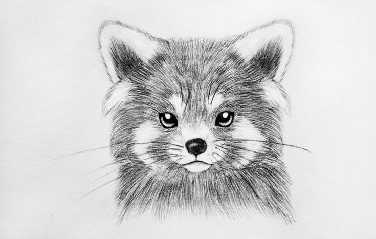red panda drawing red panda drawing by tammy liu haller panda drawing red