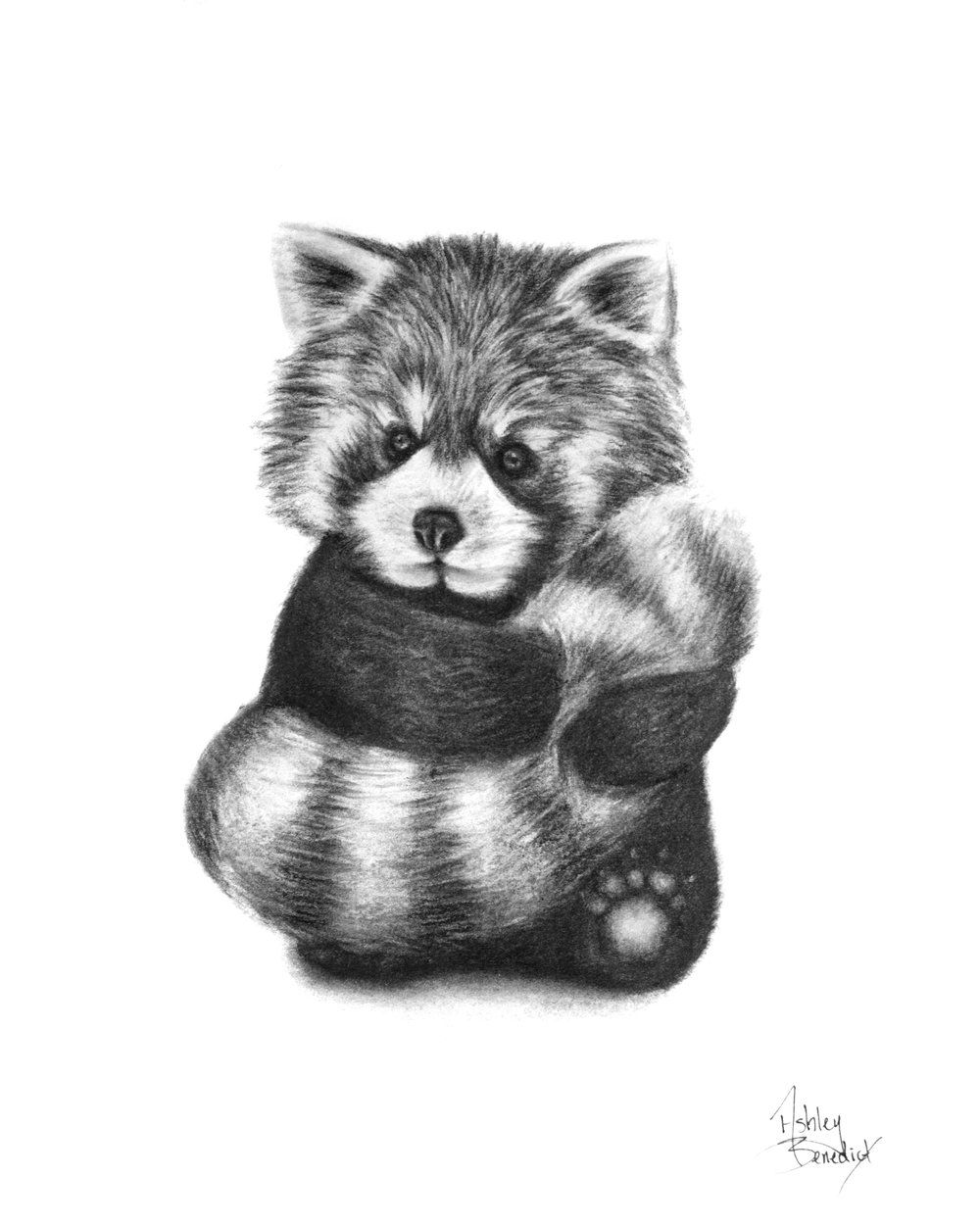 red panda drawing red panda ink illustration drawing by loren dowding panda drawing red