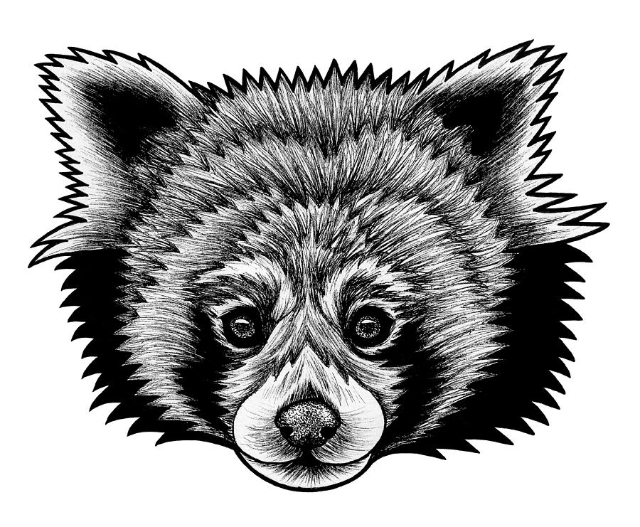 red panda drawing red panda stippling illustration by kelsey emblow kelsey red panda drawing