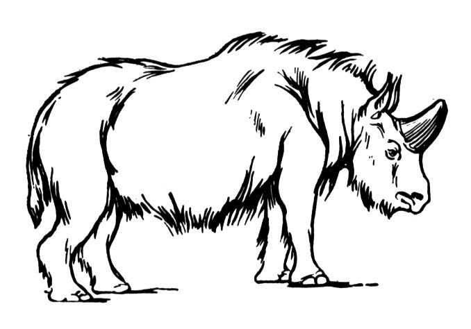 rhino coloring pages free rhino coloring pages coloring pages rhino