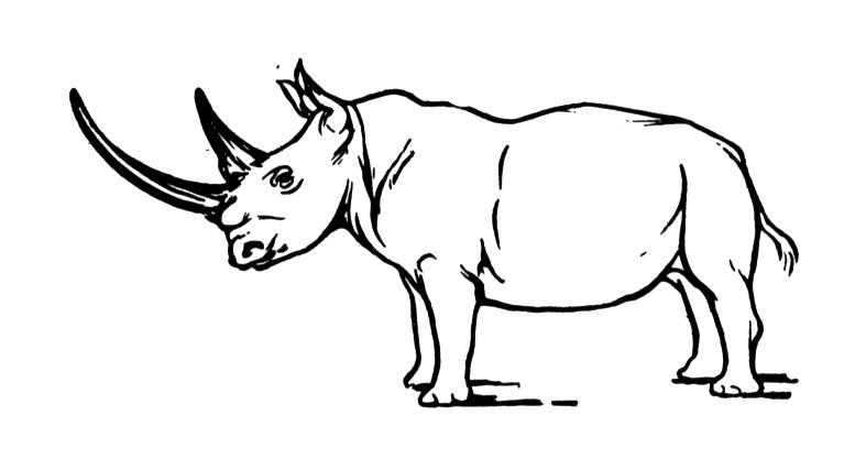 rhino coloring pages free rhino coloring pages coloring rhino pages 1 1