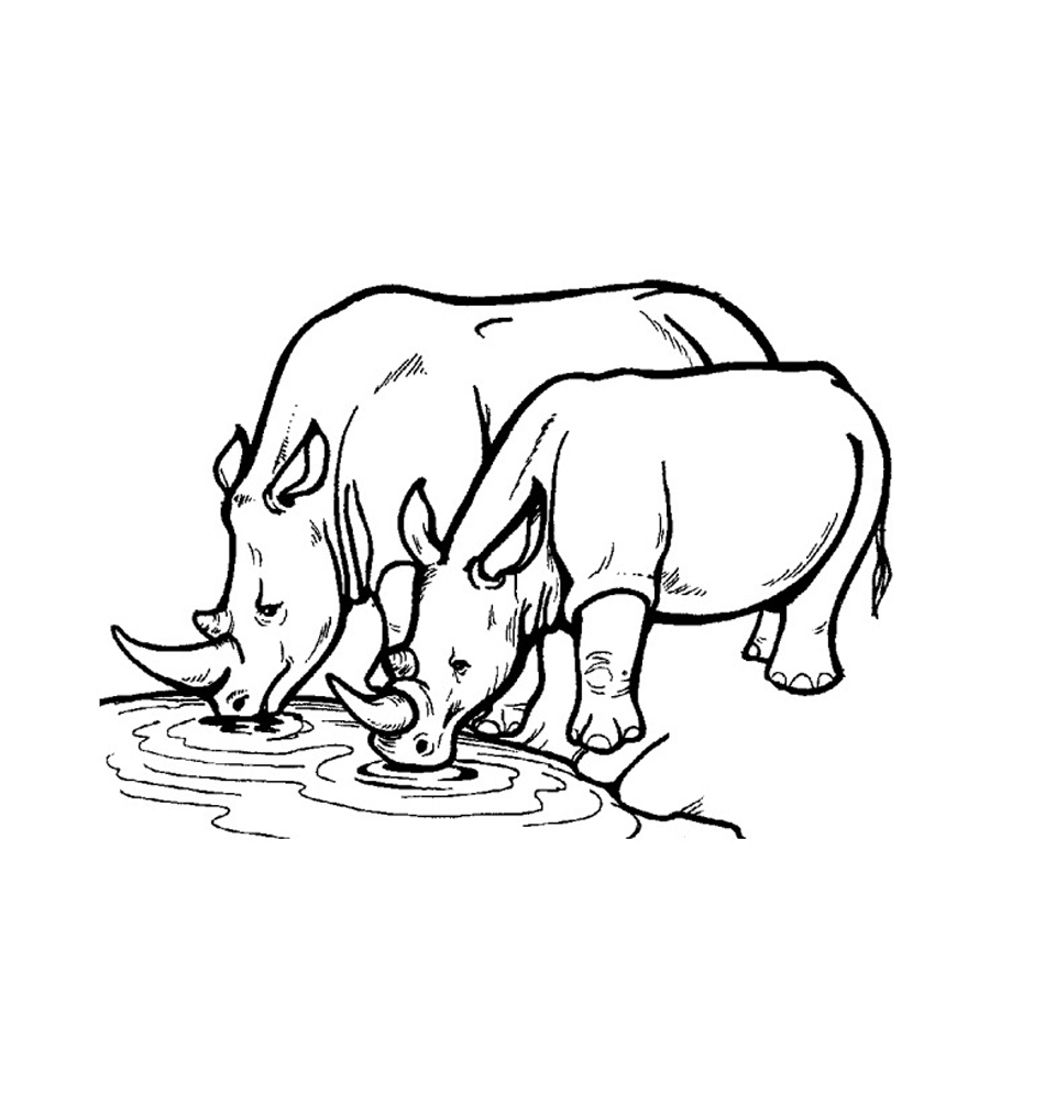 rhino coloring pages rhino coloring pages to kids pages coloring rhino
