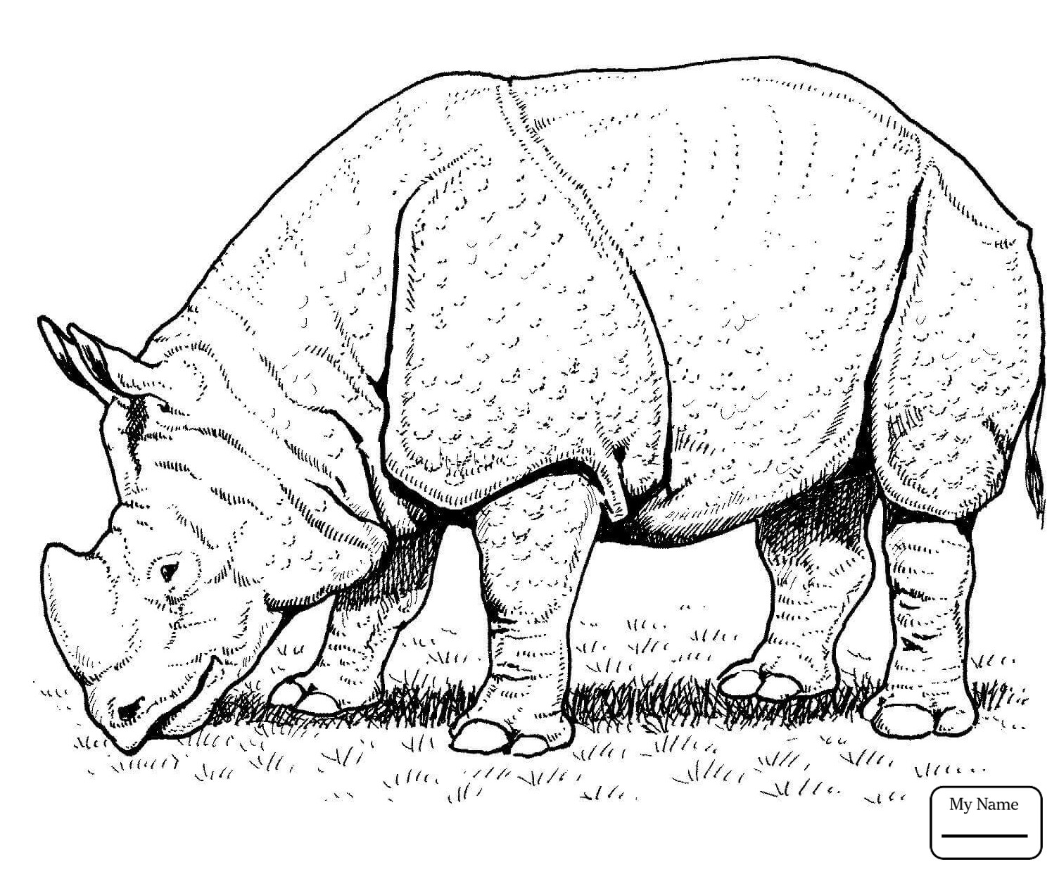 rhino coloring pages rhinoceros coloring pages at getdrawings free download pages rhino coloring