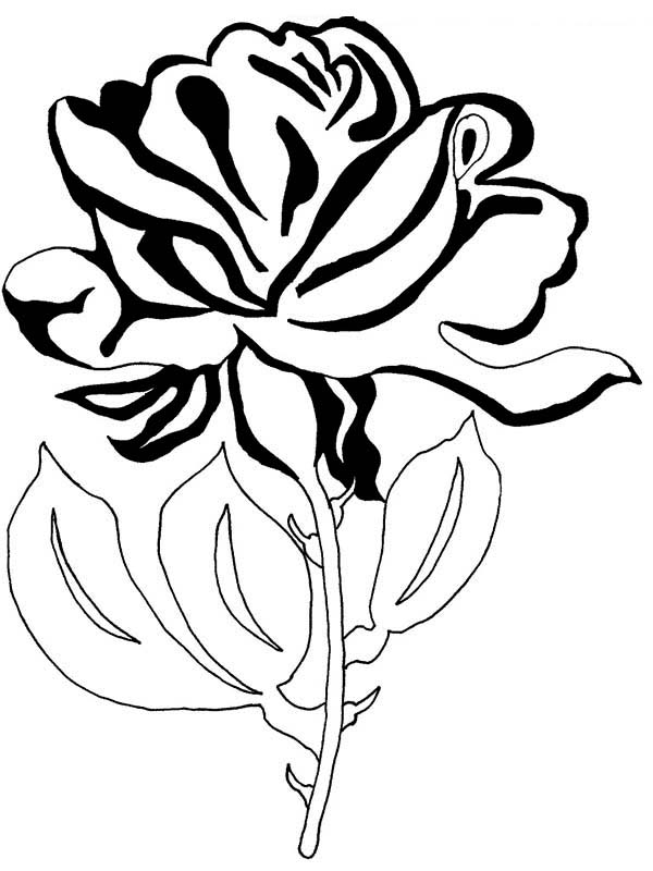 rose flower coloring pages beautiful rose flower for you coloring page netart rose flower coloring pages