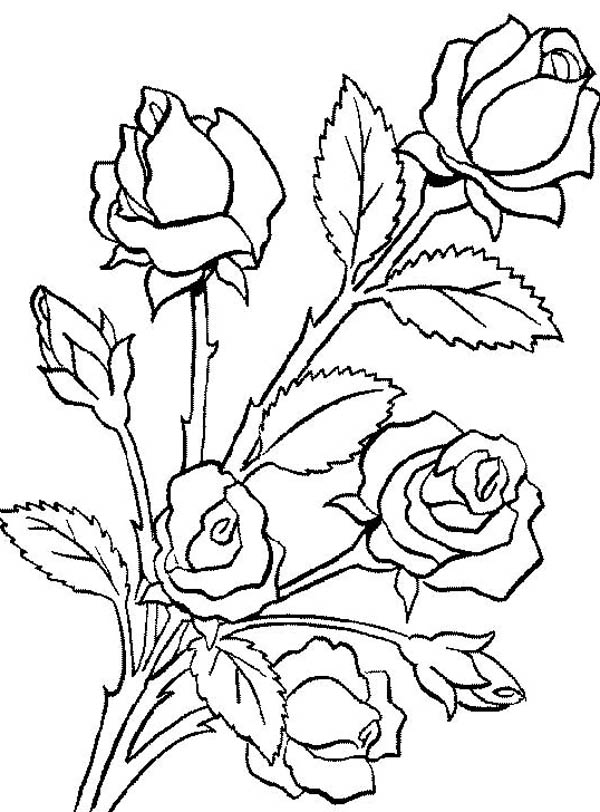 rose flower coloring pages flower bouquet is made of roses coloring page color luna rose flower coloring pages