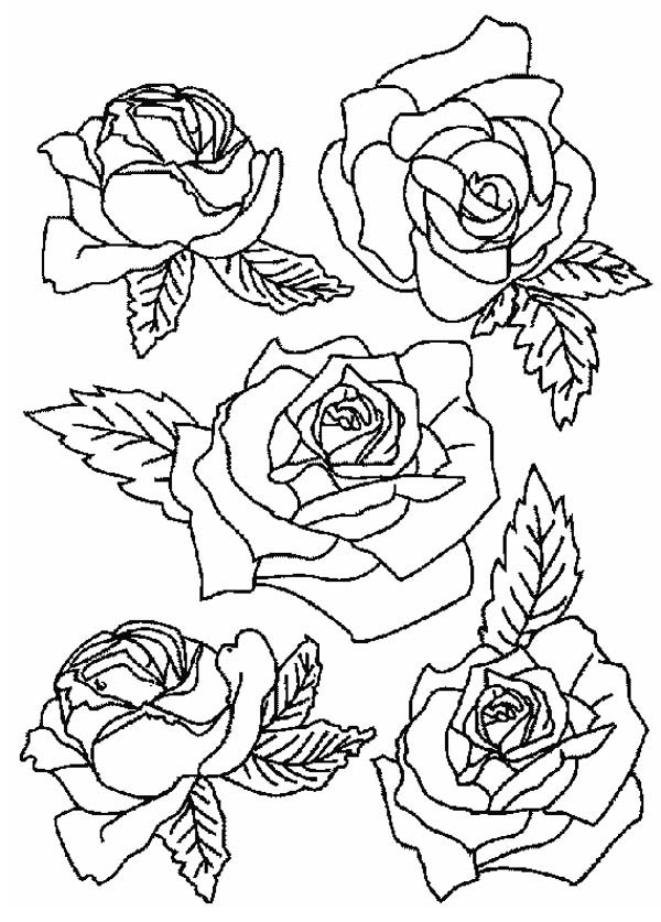 rose flower coloring pages picture of roses for flower bouquet coloring page color luna pages coloring rose flower