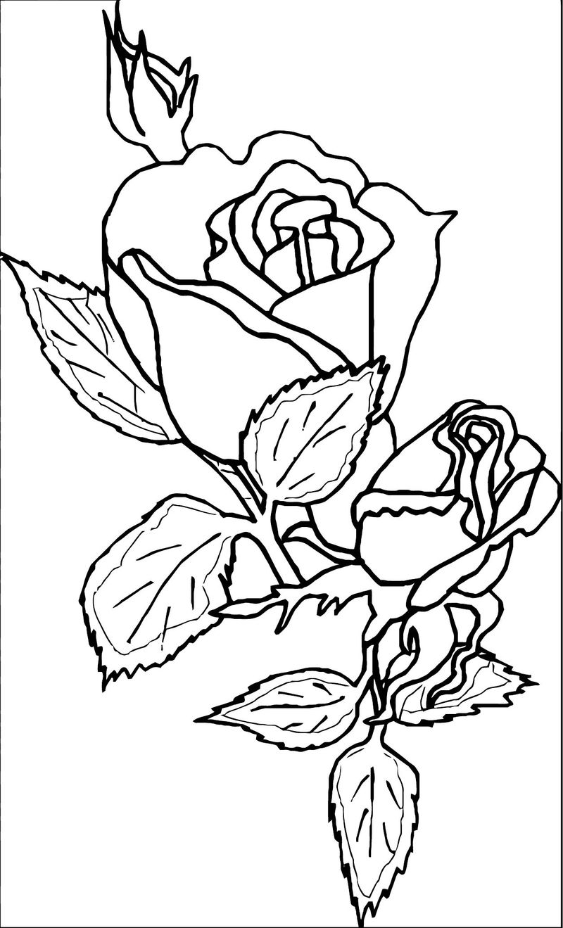 rose flower coloring pages rose flower coloring page 016 coloring sheets pages rose coloring flower