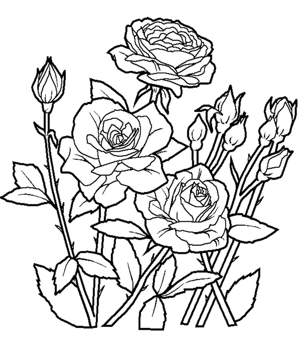 rose flower coloring pages rose garden drawing at getdrawings free download rose coloring pages flower