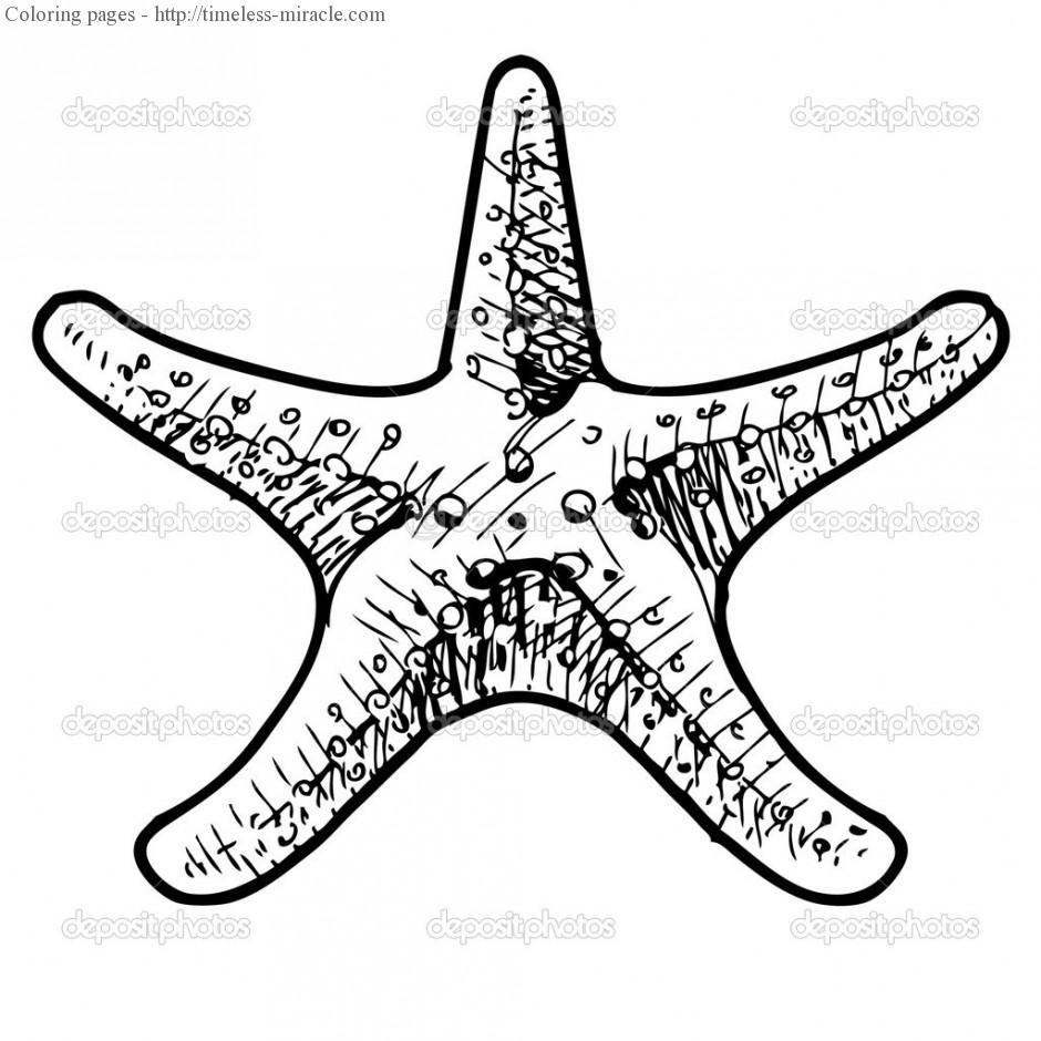 sea star coloring page free printable starfish coloring pages for kids page coloring star sea