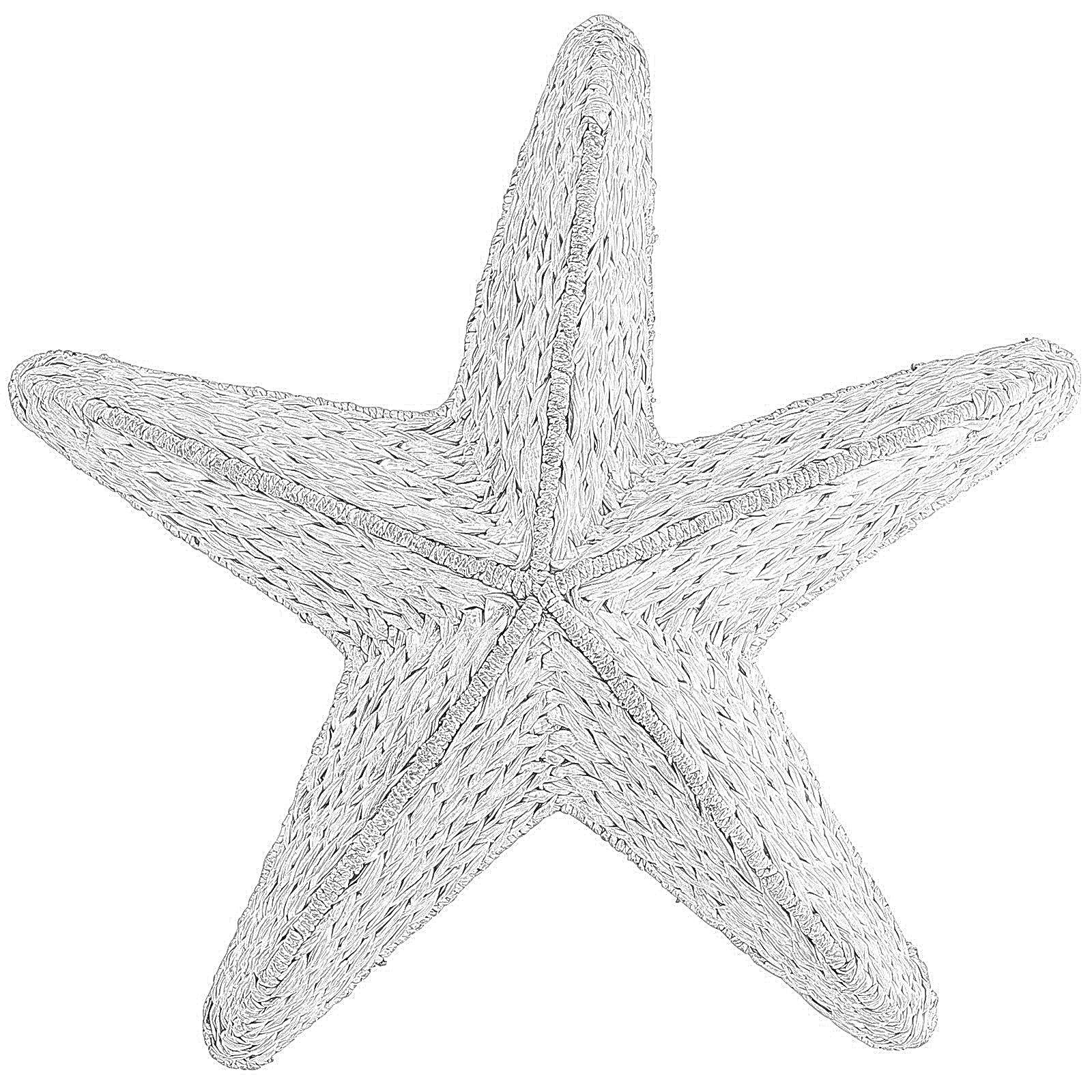 sea star coloring page sea star drawing at getdrawings free download page sea star coloring