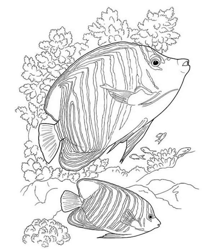 sealife coloring pages download or print this amazing coloring page ocean life pages coloring sealife