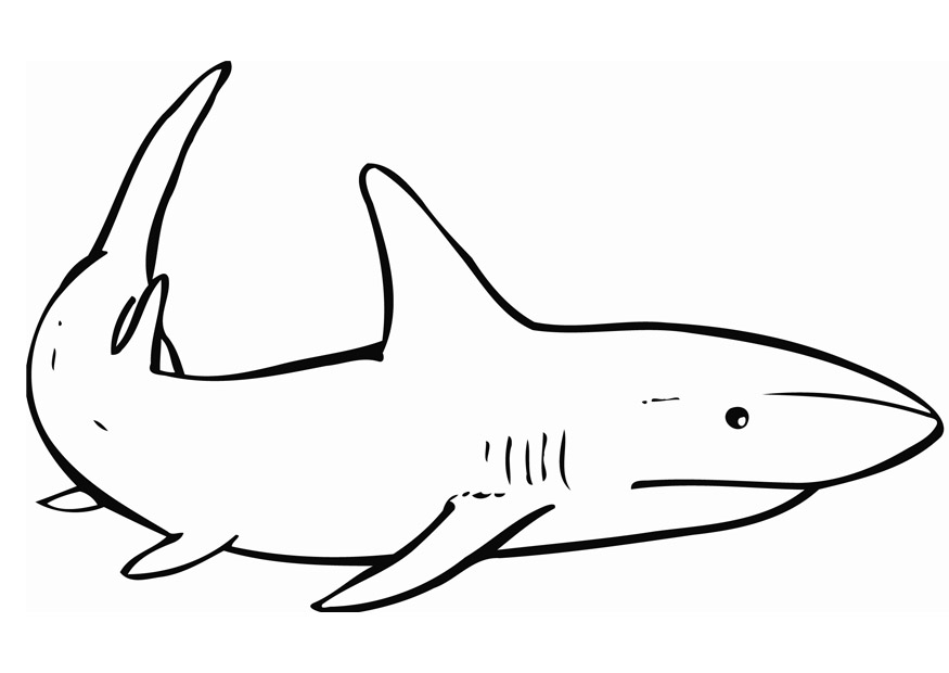 shark colouring picture a drawing of blacktip reef shark coloring page kids colouring picture shark
