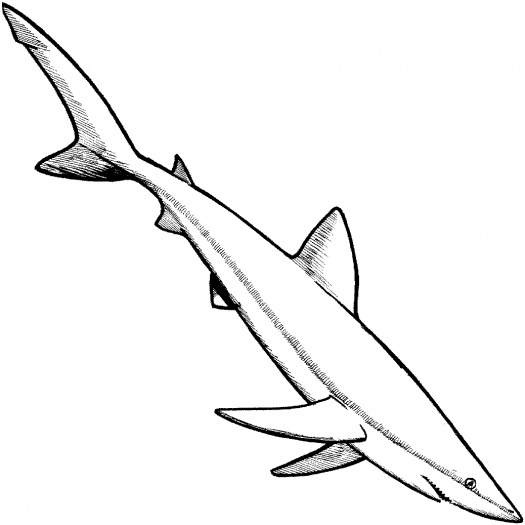 shark colouring picture easy shark coloring page free printable coloring pages shark colouring picture