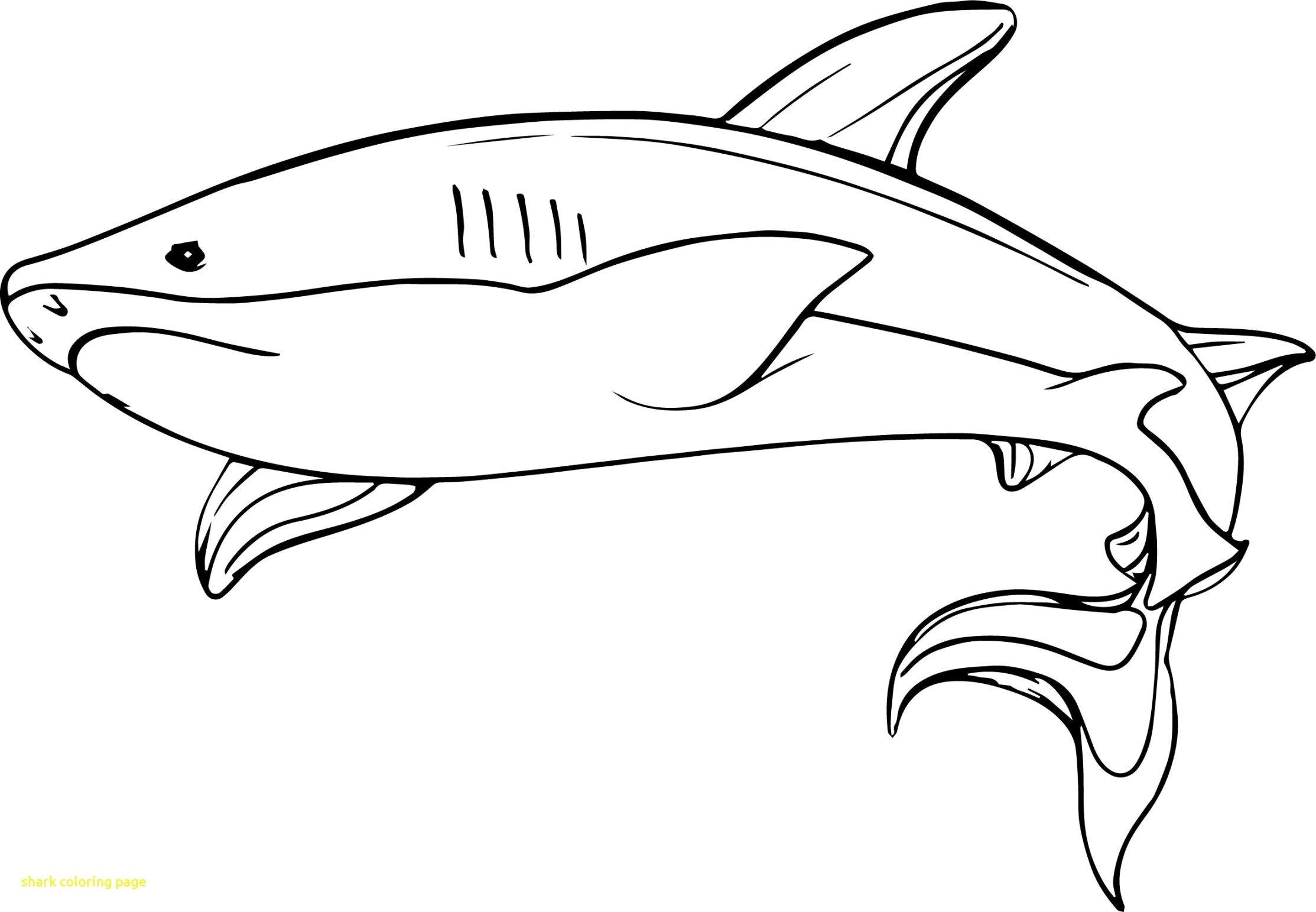 shark colouring picture shark coloring page picture colouring shark
