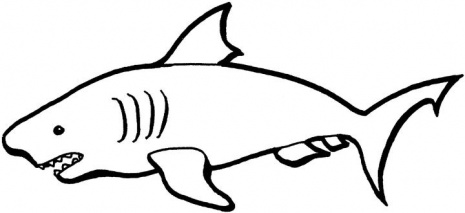 shark colouring picture sharks to print sharks kids coloring pages shark colouring picture