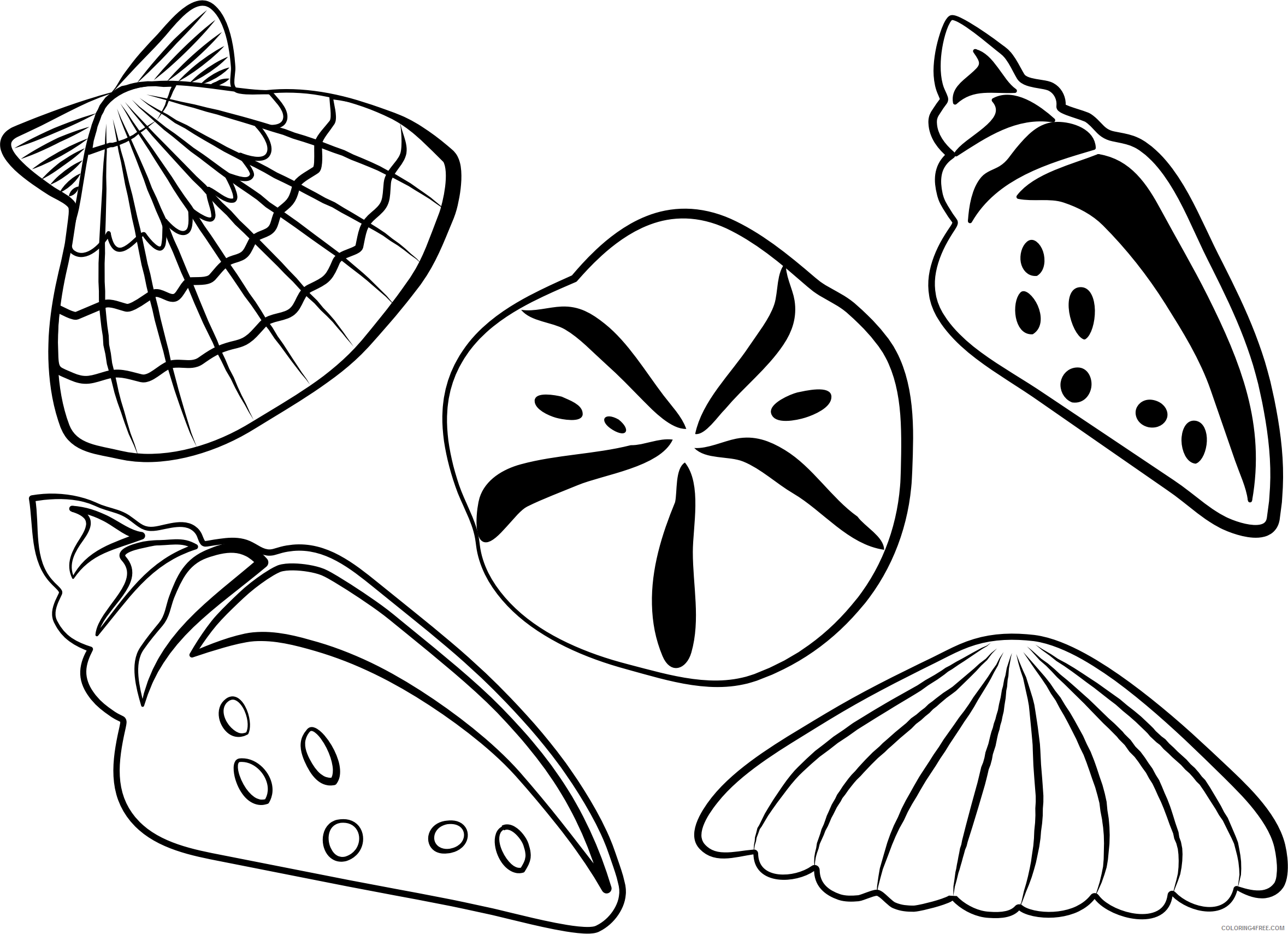 shell coloring pages coloring shell shell coloring pages