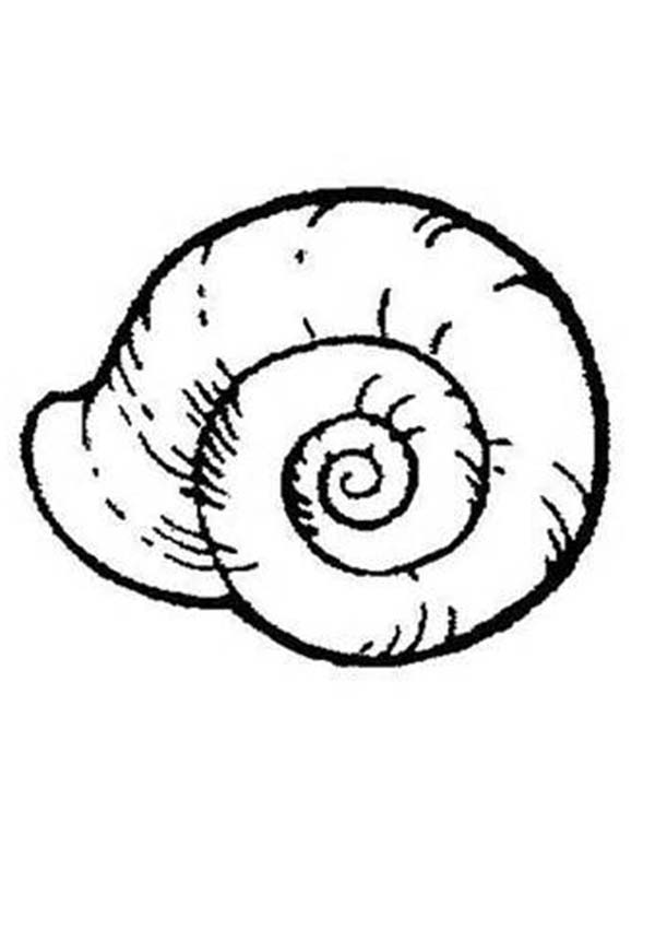 shell coloring pages shell coloring pages to download and print for free shell coloring pages 1 1