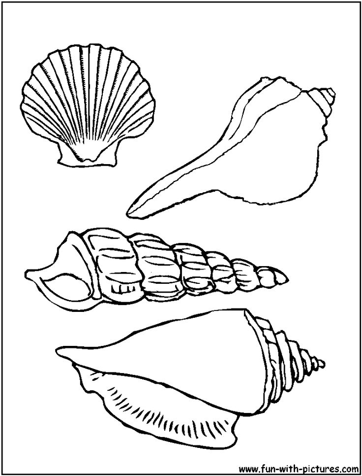 shell coloring pages shells coloring pages clipart best pages shell coloring