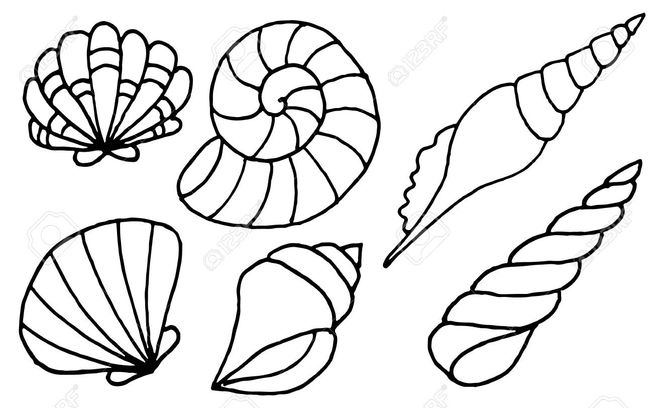 shell coloring pages spiral sea shells coloring page print color fun pages coloring shell