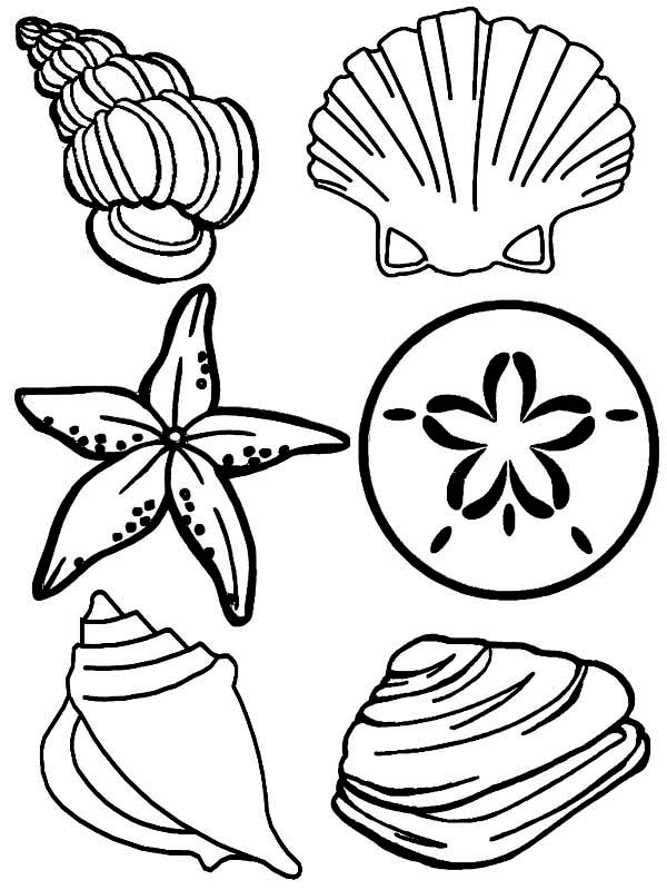 shell coloring pages top 25 free printable shell coloring pages online coloring pages shell