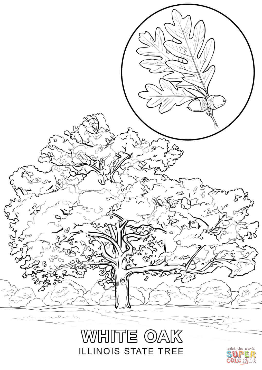 state tree coloring pages california state tree coloring page free printable pages state tree coloring
