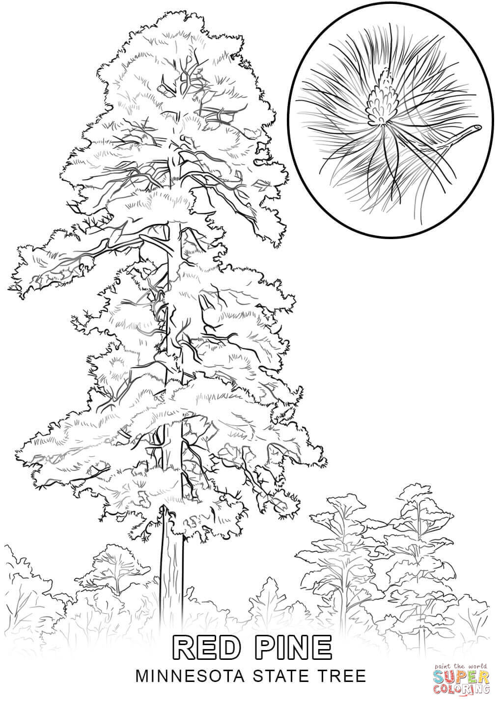 state tree coloring pages delaware state tree coloring page free printable tree coloring state pages