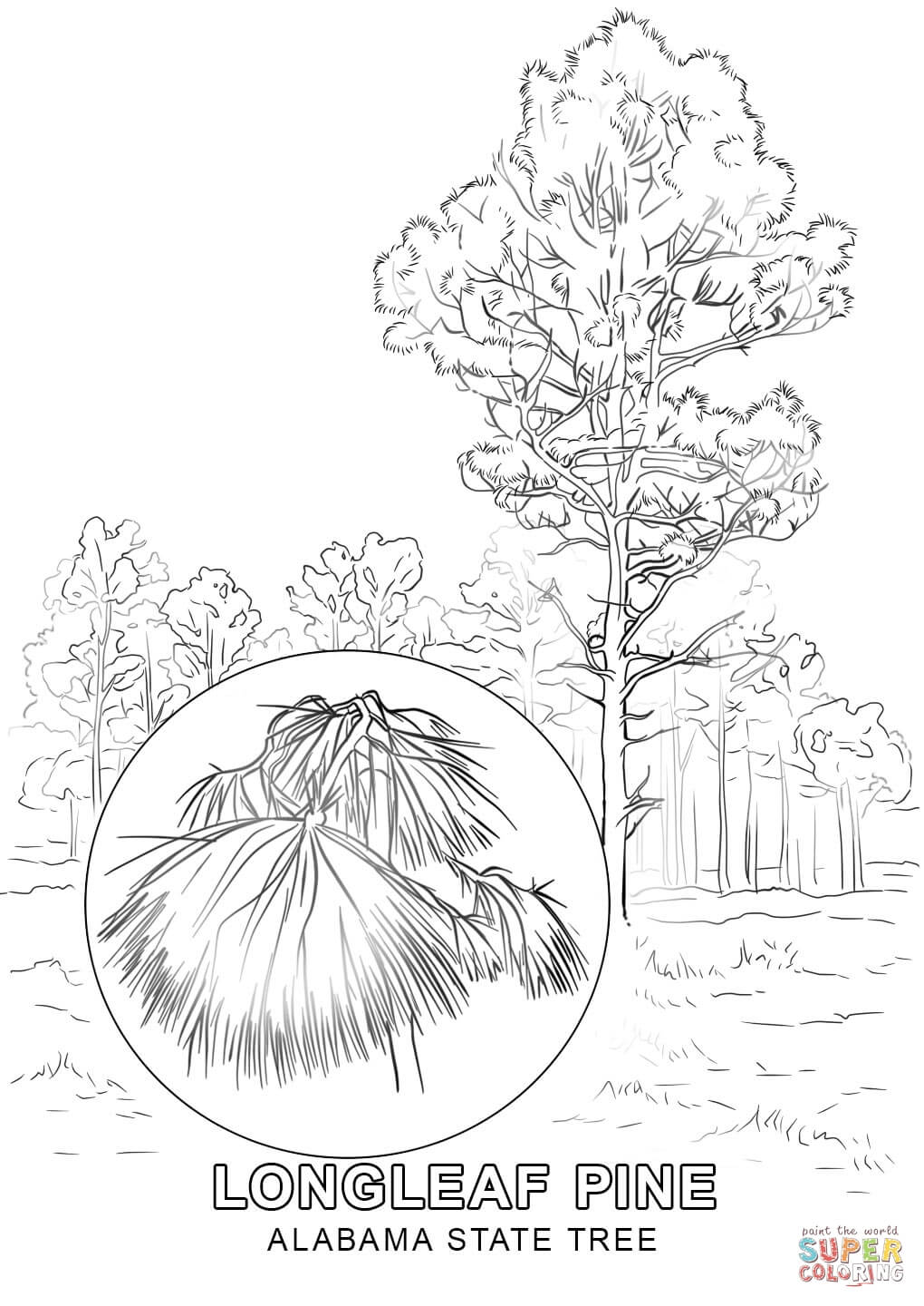 state tree coloring pages florida state tree coloring page free printable coloring coloring pages tree state