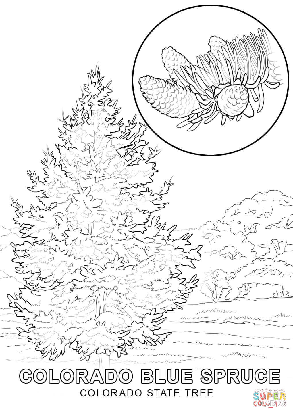 state tree coloring pages illinois state tree coloring page free printable pages coloring state tree