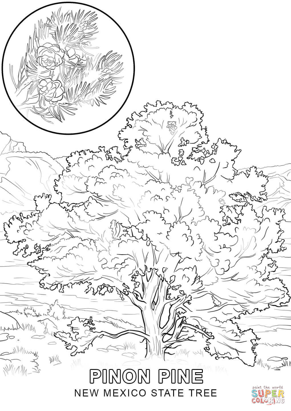 state tree coloring pages indiana state tree coloring page free printable coloring coloring tree state pages