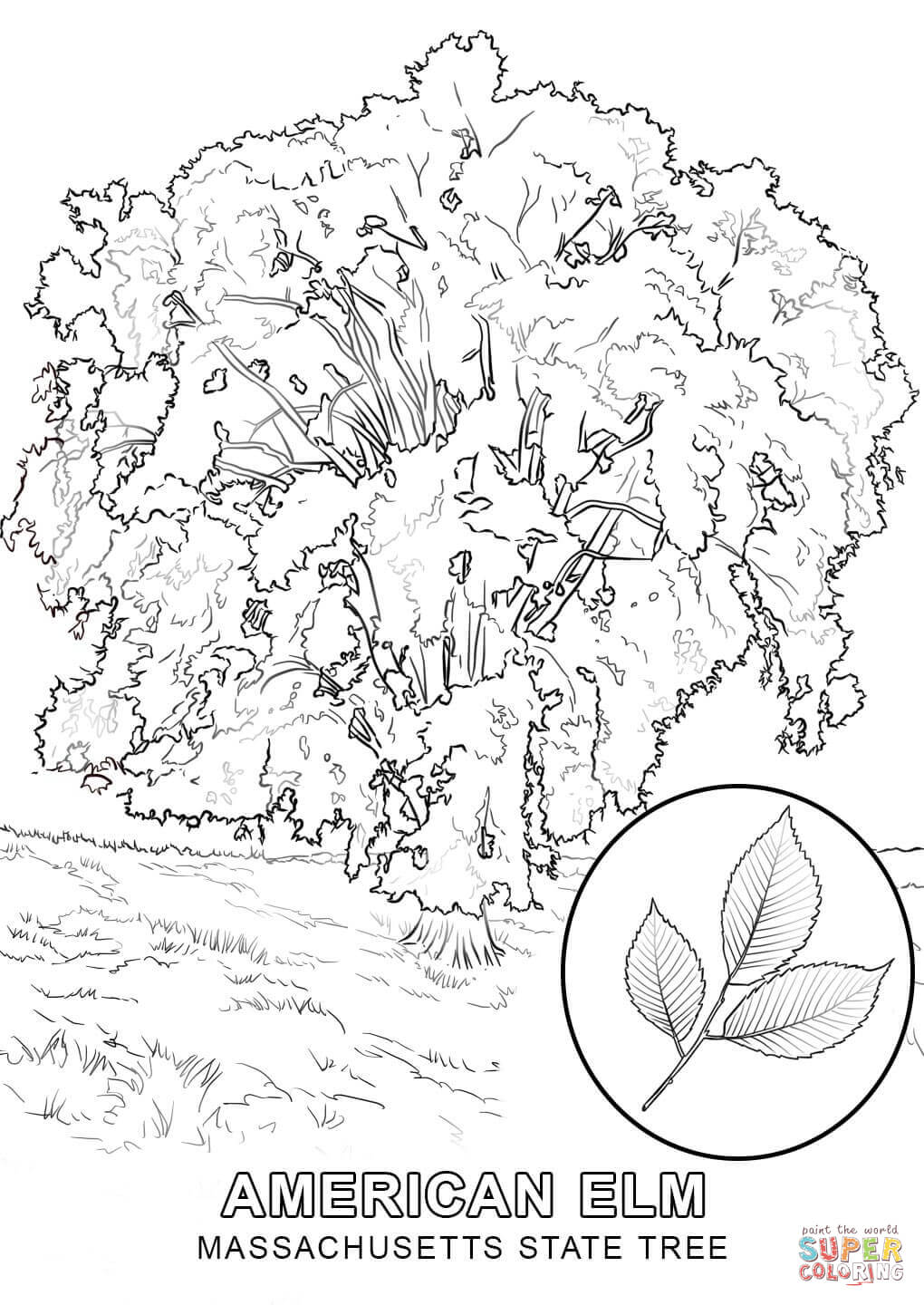 state tree coloring pages iowa state tree coloring page free printable coloring pages pages coloring tree state