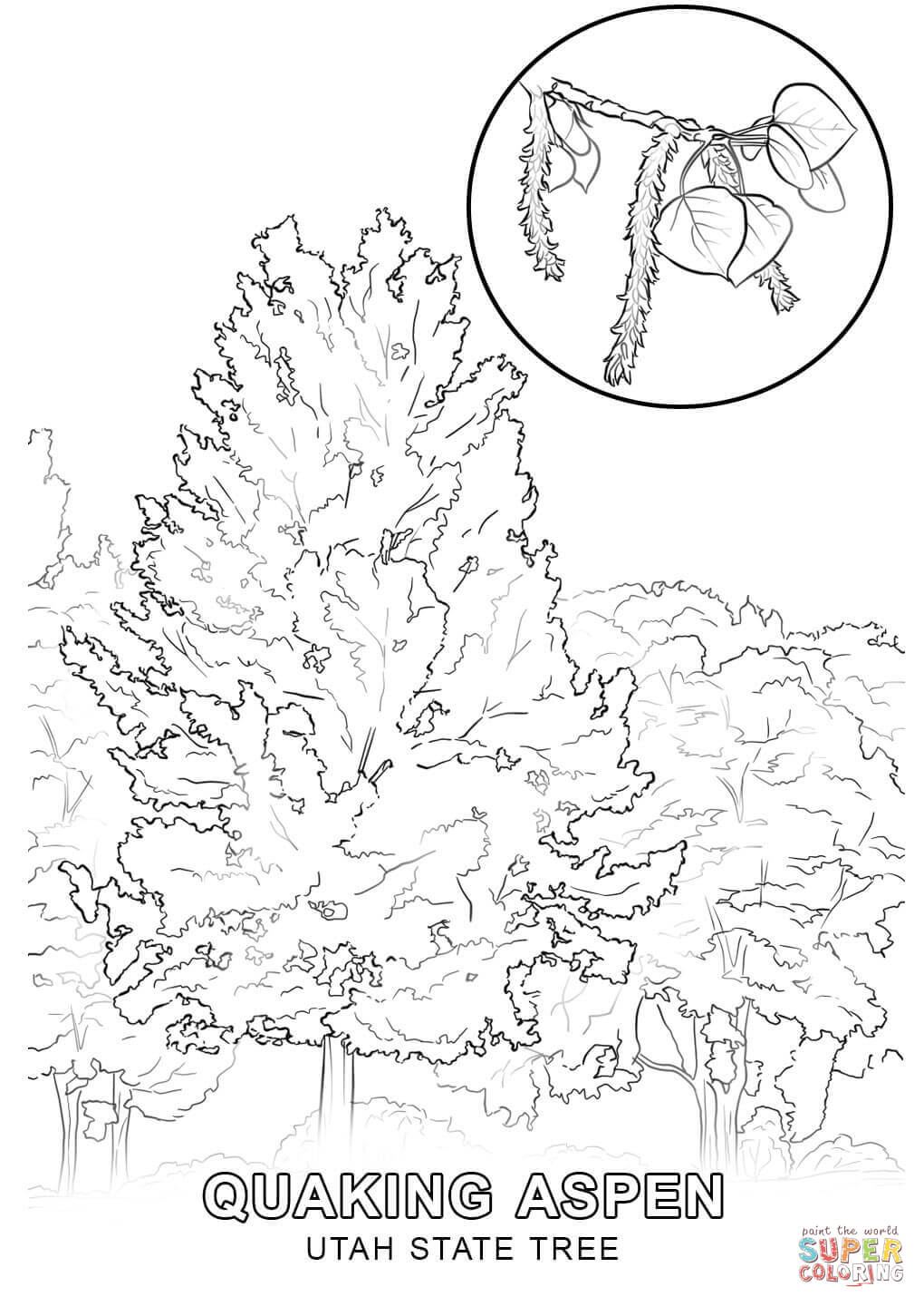 state tree coloring pages massachusetts state tree coloring page free printable tree pages coloring state