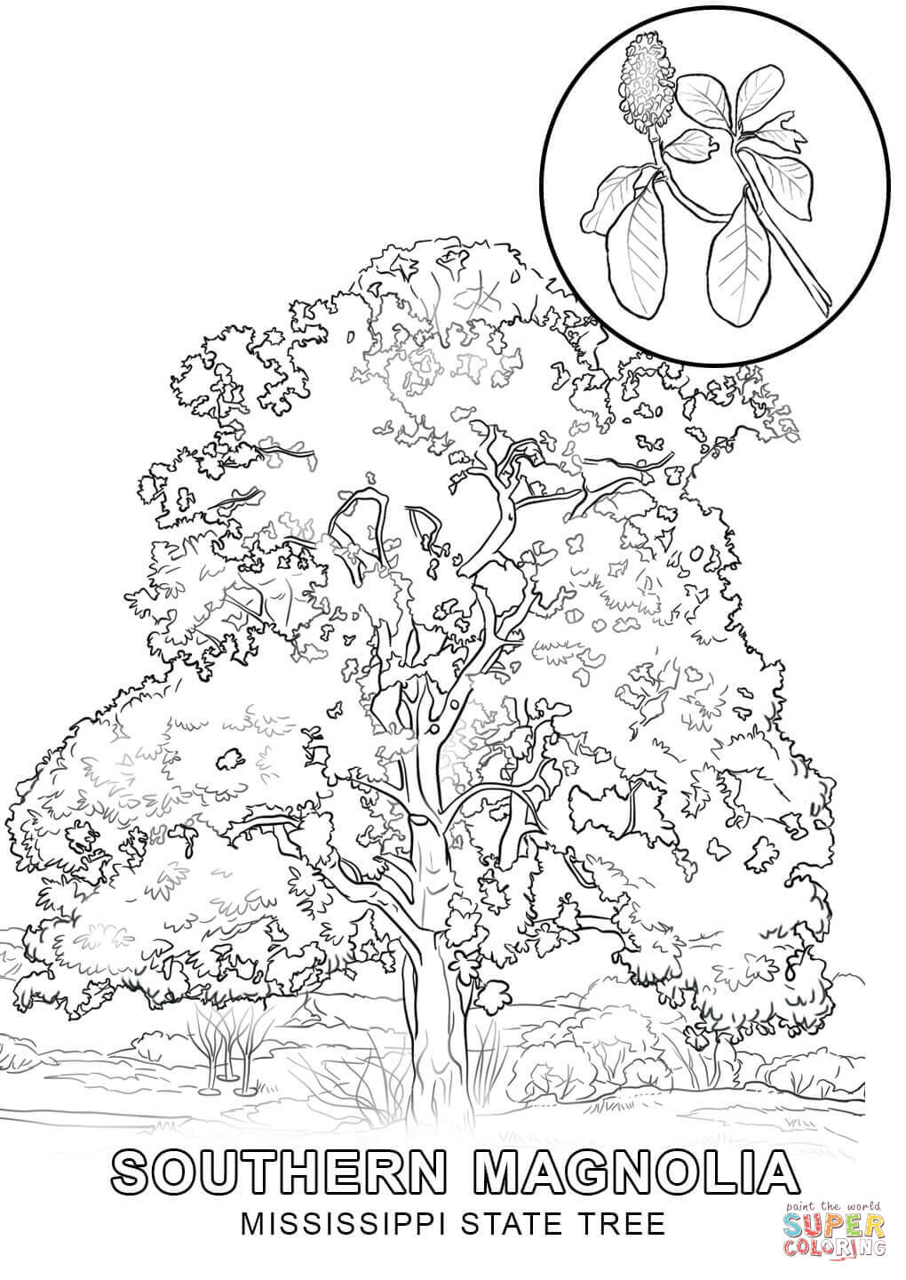 state tree coloring pages minnesota state tree coloring page free printable pages coloring state tree