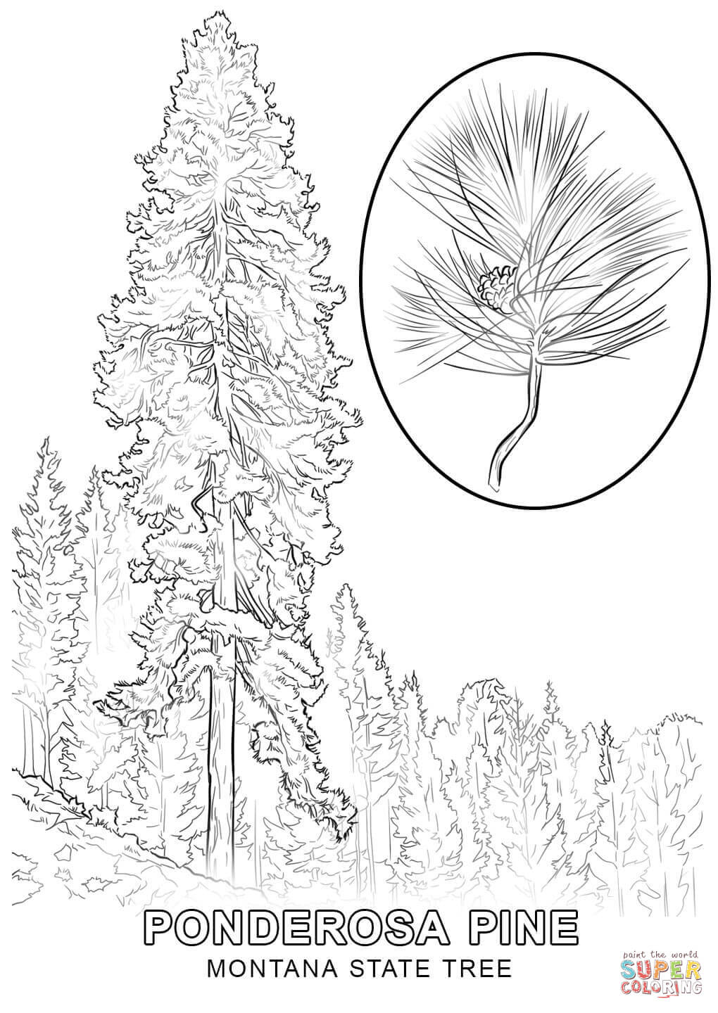 state tree coloring pages mississippi state tree coloring page free printable tree state pages coloring