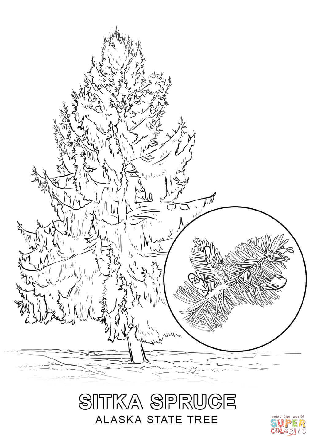 state tree coloring pages new hampshire state tree coloring page free printable coloring state tree pages