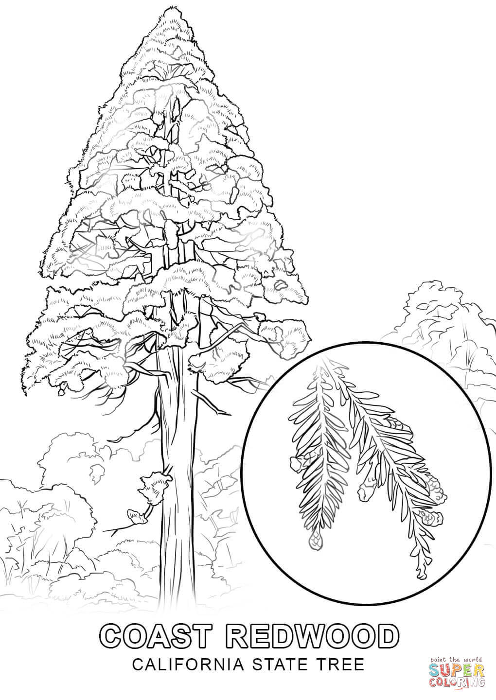 state tree coloring pages new jersey state tree coloring page free printable state pages coloring tree