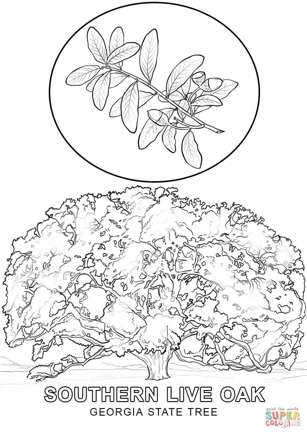 state tree coloring pages new mexico state tree coloring page free printable coloring state pages tree